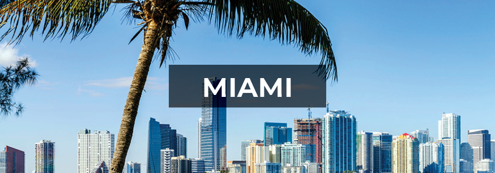 Miami skyline and palm tree.